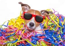 Σκυλί εορτασμού κόμματος Στοκ Φωτογραφία
