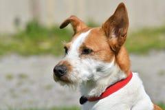 Σκυλί επάνω στενό στοκ φωτογραφία με δικαίωμα ελεύθερης χρήσης