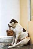 σκυλί επαιτών στοκ φωτογραφία