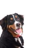 σκυλί ευτυχές Στοκ φωτογραφίες με δικαίωμα ελεύθερης χρήσης