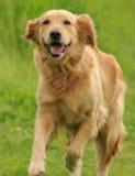 σκυλί ευτυχές