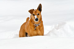 σκυλί εύθυμο Στοκ φωτογραφία με δικαίωμα ελεύθερης χρήσης