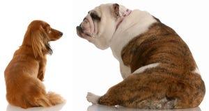 σκυλί ζευγών περίεργο Στοκ εικόνα με δικαίωμα ελεύθερης χρήσης