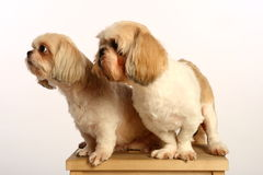 σκυλί ζευγών στοκ φωτογραφία με δικαίωμα ελεύθερης χρήσης