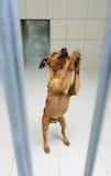 σκυλί ζώων Στοκ Φωτογραφίες