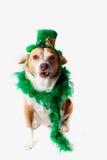 Σκυλί ημέρας Αγίου Πάτρικ Στοκ Φωτογραφία