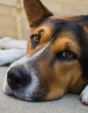 σκυλί ημερών στοκ εικόνες