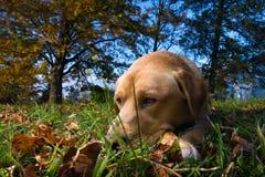σκυλί ημερών Στοκ Εικόνα
