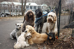 σκυλί ημερών Στοκ εικόνες με δικαίωμα ελεύθερης χρήσης