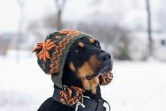 σκυλί καθιερώνον τη μόδα Στοκ φωτογραφίες με δικαίωμα ελεύθερης χρήσης