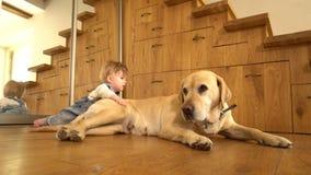 Σκυλί και αγοράκι στο πάτωμα κοντά στον καθρέφτη Γούνα αφής παιδιών του κατοικίδιου ζώου r φιλμ μικρού μήκους