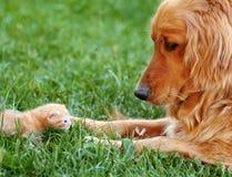 Σκυλί και γατάκι Στοκ Φωτογραφία