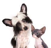 Σκυλί και γατάκι στοκ εικόνες