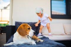 Σκυλί και κοριτσάκι λαγωνικών που έχουν τη διασκέδαση στοκ εικόνα
