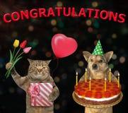 Σκυλί και μια γάτα με μια πίτα 3 διακοπών στοκ φωτογραφία