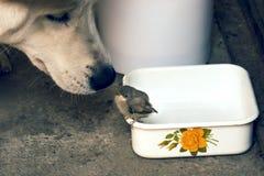 Σκυλί και νεοσσός Στοκ φωτογραφία με δικαίωμα ελεύθερης χρήσης