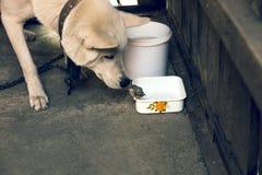 Σκυλί και νεοσσός Στοκ εικόνες με δικαίωμα ελεύθερης χρήσης