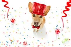 σκυλί καλή χρονιά Στοκ Εικόνες