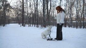 Σκυλί κατάρτισης γυναικών στο δάσος απόθεμα βίντεο