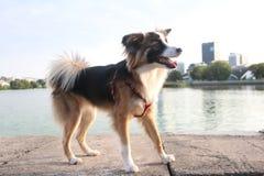 Σκυλί κατά τη διάρκεια του περιπάτου στοκ φωτογραφία