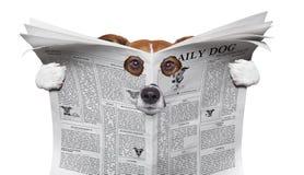 Σκυλί κατασκόπων που διαβάζει μια εφημερίδα Στοκ Εικόνες