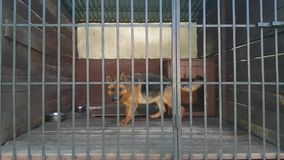 σκυλί κλουβιών φιλμ μικρού μήκους