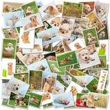 σκυλί κολάζ Στοκ εικόνα με δικαίωμα ελεύθερης χρήσης
