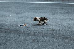 Σκυλί κουταβιών που περπατά στο δρόμο στοκ εικόνες με δικαίωμα ελεύθερης χρήσης