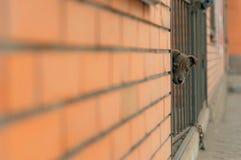 Σκυλί κουταβιών που φαίνεται κάμερα Στοκ εικόνες με δικαίωμα ελεύθερης χρήσης