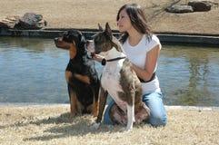 σκυλί κτηνοτρόφων στοκ εικόνα