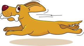 σκυλί κόκκαλων Στοκ φωτογραφίες με δικαίωμα ελεύθερης χρήσης