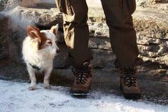 σκυλί λίγα Στοκ Φωτογραφία