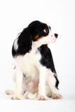 σκυλί λίγα Στοκ εικόνα με δικαίωμα ελεύθερης χρήσης