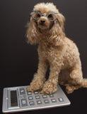 σκυλί λογιστικής Στοκ εικόνα με δικαίωμα ελεύθερης χρήσης