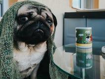 Σκυλί μαλαγμένου πηλού με μια κούπα στοκ εικόνες