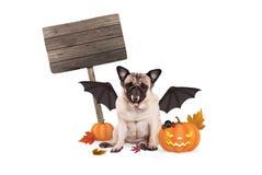 Σκυλί μαλαγμένου πηλού που ντύνεται επάνω ως ρόπαλο για αποκριές, με το τρομακτικό φανάρι κολοκύθας και το κενό ξύλινο σημάδι Στοκ Εικόνες