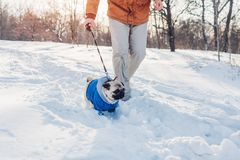 Σκυλί μαλαγμένου πηλού που περπατά στο χιόνι με τον κύριό του Κουτάβι που φορά το χειμερινό παλτό στοκ φωτογραφία