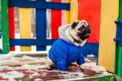 Σκυλί μαλαγμένου πηλού στα χειμερινά ενδύματα που κάθονται στην παιδική χαρά υπαίθρια Pet που περιμένει την εντολή στοκ εικόνες