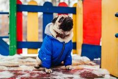 Σκυλί μαλαγμένου πηλού στα χειμερινά ενδύματα που κάθονται στην παιδική χαρά υπαίθρια Pet που περιμένει την εντολή στοκ εικόνα με δικαίωμα ελεύθερης χρήσης