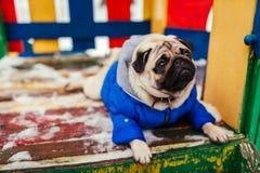 Σκυλί μαλαγμένου πηλού στα χειμερινά ενδύματα που κάθονται στην παιδική χαρά υπαίθρια Pet που περιμένει την εντολή στοκ φωτογραφία
