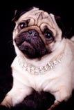 Σκυλί μαλαγμένου πηλού Στοκ φωτογραφία με δικαίωμα ελεύθερης χρήσης