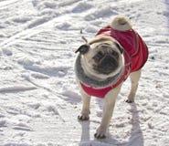 Σκυλί μαλαγμένου πηλού Στοκ εικόνα με δικαίωμα ελεύθερης χρήσης