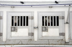 σκυλί μεταφορέων Στοκ φωτογραφία με δικαίωμα ελεύθερης χρήσης
