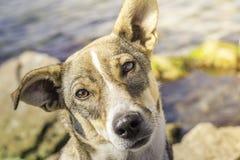 Σκυλί με ένα περίεργο βλέμμα Στοκ Φωτογραφίες