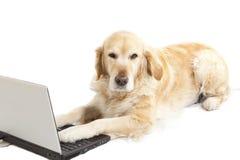 Σκυλί με ένα lap-top Στοκ φωτογραφίες με δικαίωμα ελεύθερης χρήσης