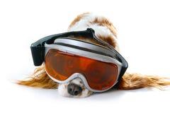 Σκυλί με να κάνει σκι τα eyewear εξαρτήματα γυαλιών ηλίου μασκών ματιών σκι χαριτωμένη απεικόνιση Στοκ εικόνα με δικαίωμα ελεύθερης χρήσης