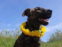 Σκυλί με τα λουλούδια στοκ εικόνα