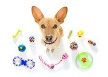 Σκυλί με τα παιχνίδια κατοικίδιων ζώων Στοκ φωτογραφίες με δικαίωμα ελεύθερης χρήσης