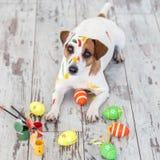 Σκυλί με τα χρωματισμένα αυγά Πάσχας Στοκ φωτογραφίες με δικαίωμα ελεύθερης χρήσης