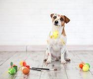 Σκυλί με τα χρωματισμένα αυγά Πάσχας Στοκ Φωτογραφίες
